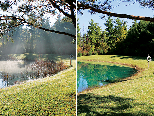 Cattail Removal Before and After